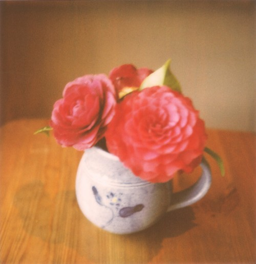 polaroid - flowers in a jug