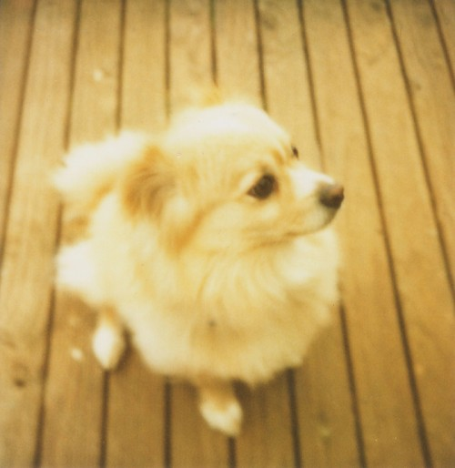 polaroid - jelly (my dog) on the deck