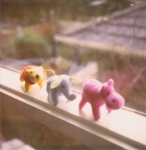 polaroid - plush animals on a windowsill